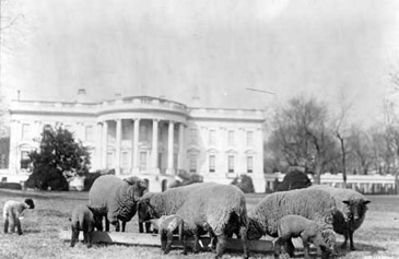 PresidentialPets,WoodrowWilson,sheep
