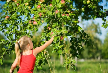 Young girl in tank top reaching for applw on tree.