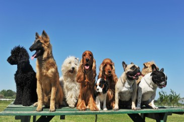 Best Dogs for Kids, group of dogs of different breeds and mutts