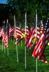 American flags on a memorial field