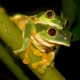 Tree frogs in the rain forest