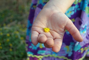Young girl holding yellow flower in palm of hand