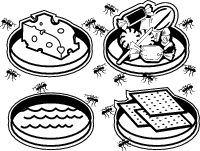 Ants are attracted to different types of foods.