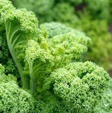 iron-rich vegetables for prenatal diet