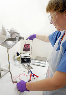 lab technician working with cord blood