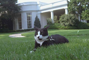PresidentialPets,BillClinton,cat,Socks