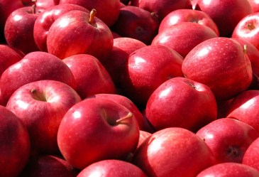 Close up of all red apples