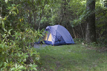 Camping,Forest,Tent