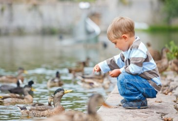 Cute little boy feeding ducks in a pond