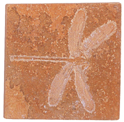 FOSSILIZED DRAGONFLY