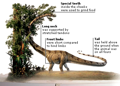 barosaurus dinosaurs