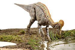 CORYTHOSAURUS ON DRY LAND
