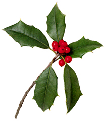 FEMALE HOLLY