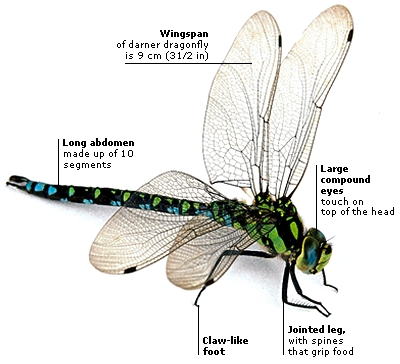 DK Science: Insects