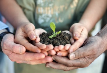 Family hands holding seedling