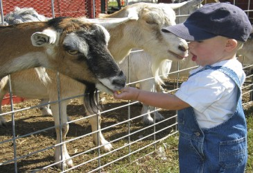 SpringActivities,FarmAnimals,FeedingFamrAnimals,FeedingGoats,KidFeedingGoats
