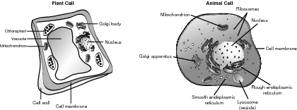 A typical cell.