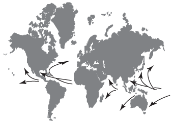Source regions and path of hurricanes.