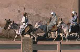 people riding donkeys