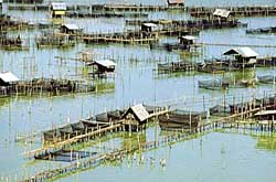THAI FISH FARM