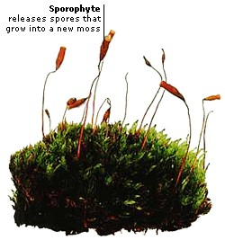 MOSS REPRODUCTION