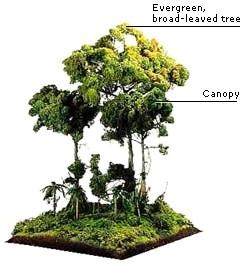 Ecological Canopy Layer Rainforest - Animals Plants Rainforest  sc 1 st  rainwear & THE RAINFOREST CANOPY LAYER | RAINWEAR