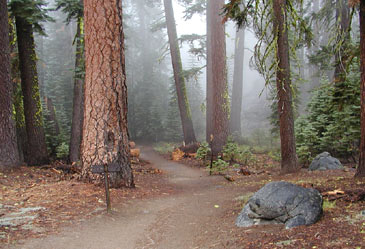 California,RedwoodPark