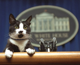 Socks the Cat in the White House press room