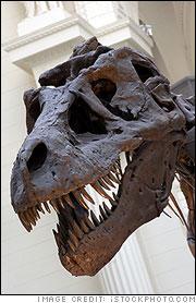T-Rex skull and bones