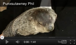 Video: Punxsutawney Phil