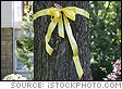 Yellow Ribbon Tied Around Tree