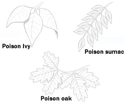 Poison ivy, poison oak, and poison sumac can cause severe rashes and itching.